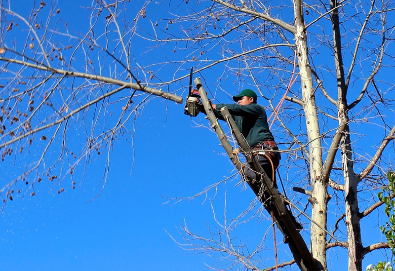 The Best Chainsaw Every Home Owner Should Have